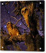 Night Owls Acrylic Print by Phil Penne
