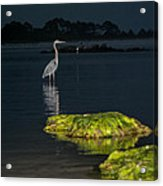 Night Stalker Acrylic Print by Volker blu Firnkes