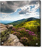 North Carolina Blue Ridge Mountains Roan Rhododendron Flowers Nc Acrylic Print by Dave Allen
