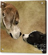 Nose To Nose Dogs Acrylic Print by Linsey Williams