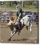 Not His First Rodeo Acrylic Print by Kris Wolf