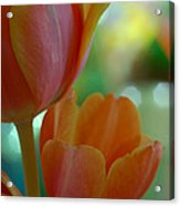 Nothing As Sweet As Your Tulips Acrylic Print by Donna Blackhall