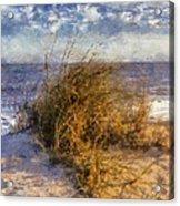 November Dune Grass Acrylic Print by Daniel Eskridge