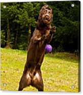 Nute And The Ball Acrylic Print by Jean Noren