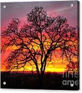 Oak Silhouette Acrylic Print by Cheryl Young