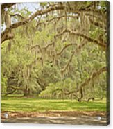 Oak Trees Draped With Spanish Moss Acrylic Print by Kim Hojnacki