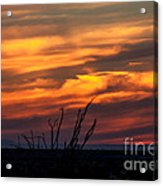 Ocotillo Sunset Acrylic Print by Robert Bales