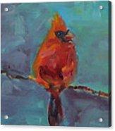 Oklahoma Cardinal Acrylic Print by Susie Jernigan
