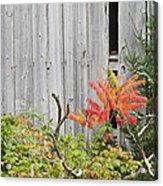 Old Barn In Fall Acrylic Print by Keith Webber Jr