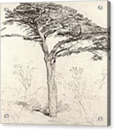 Old Cedar Tree In Botanic Garden Chelsea Acrylic Print by Samuel Palmer