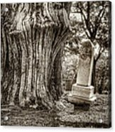 Old Friends Acrylic Print by Scott Norris