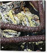 Old Trap Close-up Acrylic Print by Minnie Lippiatt