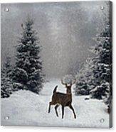 On A Snowy Evening Acrylic Print by Lianne Schneider