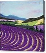 On Lavender Trail Acrylic Print by Anastasiya Malakhova