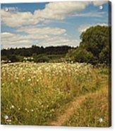 On The Summer Meadow II. Russia Acrylic Print by Jenny Rainbow