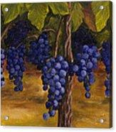 On The Vine Acrylic Print by Darice Machel McGuire