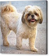 One Happy Little Dog Acrylic Print by Lainie Wrightson