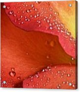 One In Ten Thousand  Acrylic Print by JC Findley