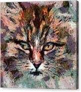 One More Cat Acrylic Print by Yury Malkov