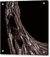 Onion Skin Two Acrylic Print by Bob Orsillo