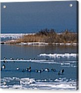 Open Water Acrylic Print by Skip Willits