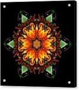 Orange Gazania IIi Flower Mandala Acrylic Print by David J Bookbinder
