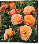 Orange Roses Acrylic Print by Carol Groenen