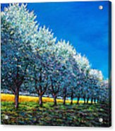 Orchard Row Acrylic Print by Johnathan Harris