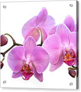 Orchid Flowers - Pink Acrylic Print by Natalie Kinnear