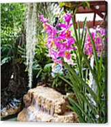 Orchid Garden Acrylic Print by Carey Chen