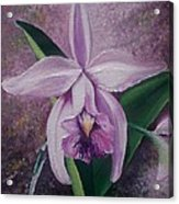 Orchid Lalia Acrylic Print by Karin  Dawn Kelshall- Best