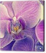 Orchid Lilac Dark Acrylic Print by Hannes Cmarits
