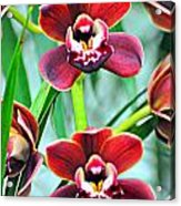 Orchid Rusty Acrylic Print by Marty Koch