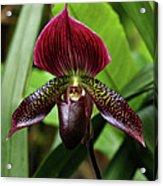 Orchid Acrylic Print by Sandy Keeton