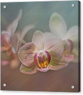 Orchids In The Mist Acrylic Print by John Kain