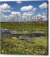 Orlando Wetlands Cloudscape 2 Acrylic Print by Mike Reid