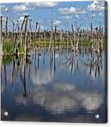Orlando Wetlands Cloudscape 5 Acrylic Print by Mike Reid