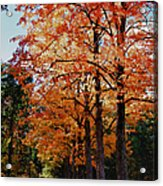 Over The Hill And Through The Trees Acrylic Print by Jeff Folger