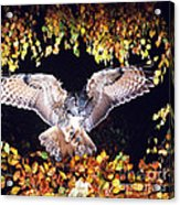 Owl About To Land Acrylic Print by Manfred Danegger