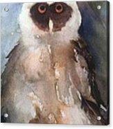 Owl Acrylic Print by Sherry Harradence