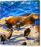 Pacific Harbor Seal Acrylic Print by Jim Carrell