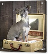 Packed And Ready To Go Acrylic Print by Edward Fielding