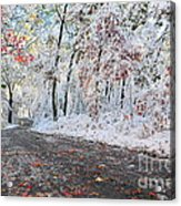 Painted Snow Acrylic Print by Catherine Reusch  Daley