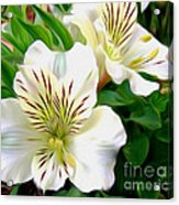 Painterly Alstroemeria Acrylic Print by Kaye Menner