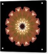 Pale Pink Tulip Flower Mandala Acrylic Print by David J Bookbinder