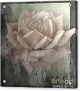 Pale Rose Photoart Acrylic Print by Debbie Portwood