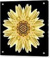 Pale Yellow Gerbera Daisy I Flower Mandala Acrylic Print by David J Bookbinder