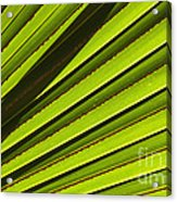 Palm Lines Acrylic Print by Mike  Dawson