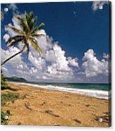 Palm Tree On Maunabo Beach Puerto Rico Acrylic Print by George Oze