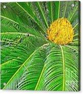 Palm Tree With Blossom Acrylic Print by Dragomir Nikolov